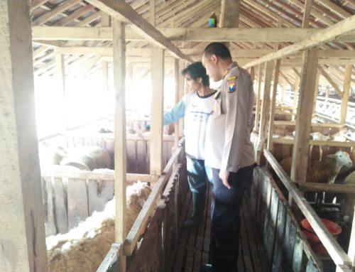 Antisipasi Pencurian Hewan Ternak,Kapolsek Mumbulsari Himbau Pemilik Hewan Ternak
