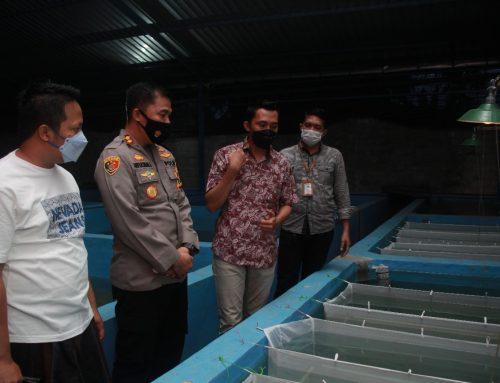 Dari Usaha Ikan Lele Desa Keting Kecamatan Jombang Jember ini Ciptakan Produk Eksport